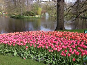 The Keukenhof Gardens is an absolute horticulturalist dream