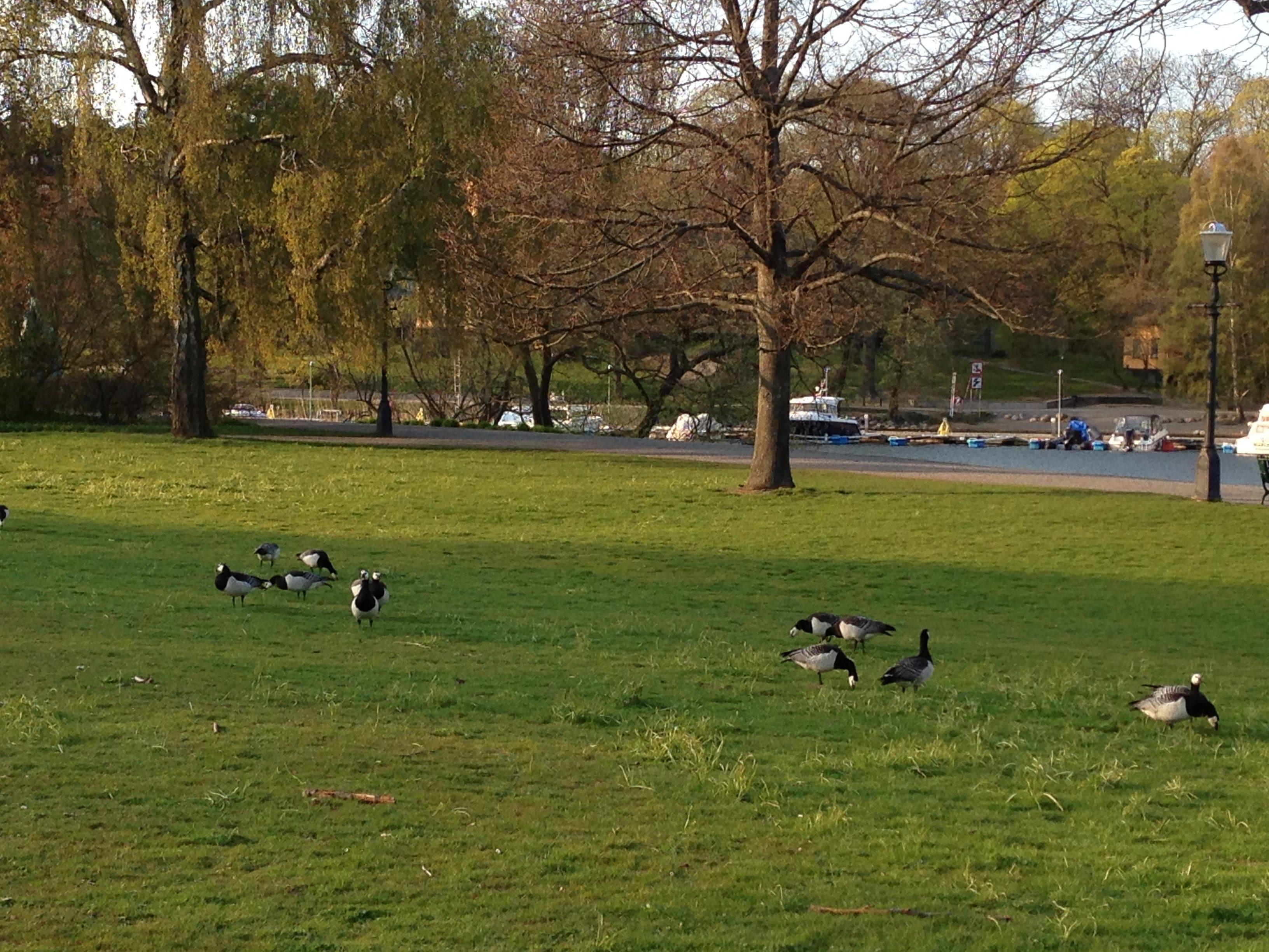 The green pastures of Djurgården in Stockholm