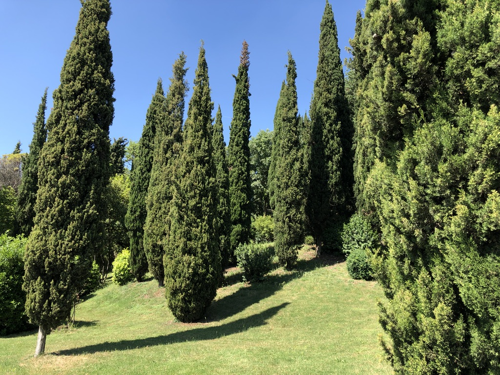 Cypress trees at the Giusti Gardens in Verona